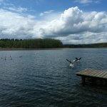 Vögel lieben den FKK Campingplatz im Frühling