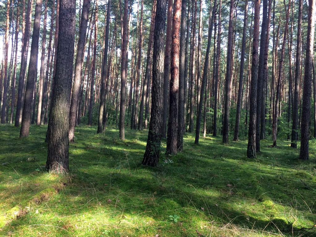 Wald Rätzsee